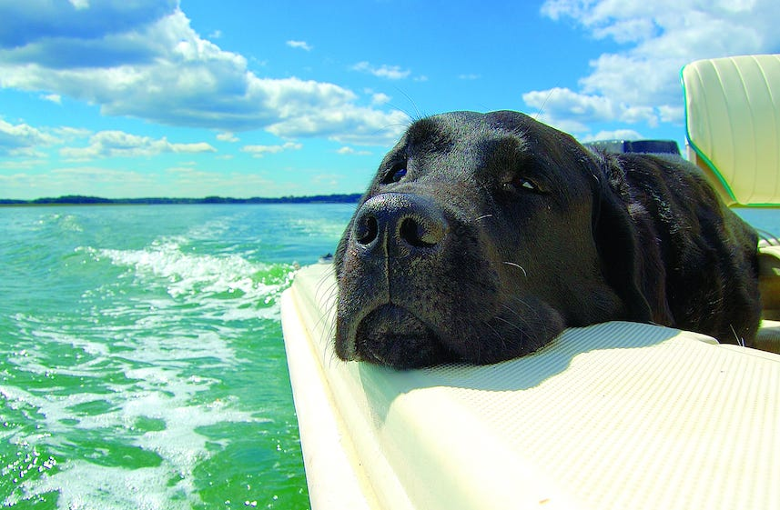 Hot Stuff! Boating During the Dog Days