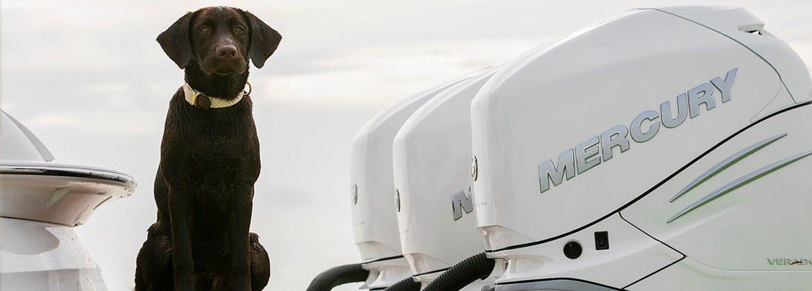 Boat Outboard Engine Motor White Motor